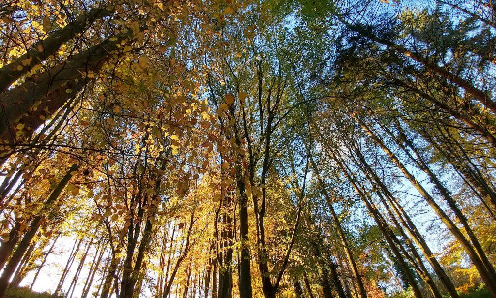 Stratford Park Autumn